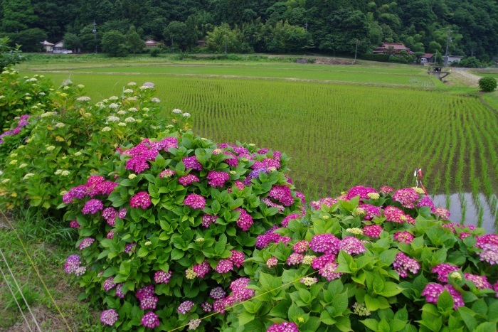 梅雨時期の田舎風景