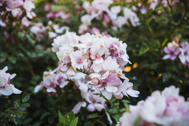 beautiful-blooming-shrub_23-2147829205.jpg