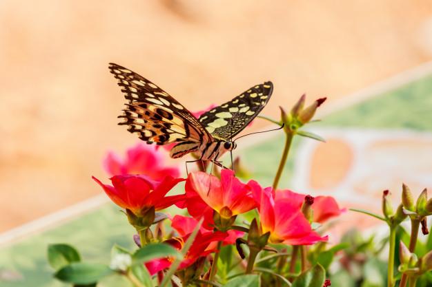 butterflies-on-flowers_38228-30.jpg