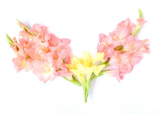elegant-light-pink-floral-multipurpose-background_1340-9569.jpg
