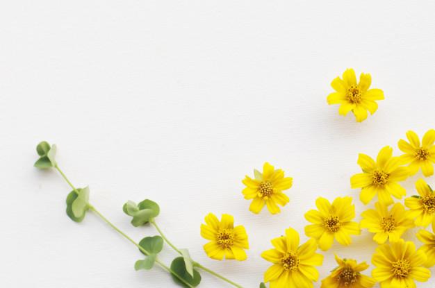 flowers-pattern-on-white-background_36750-7.jpg