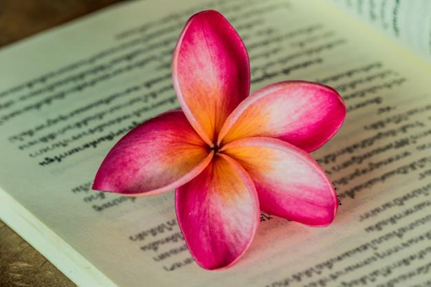 pink-frangipani-flowers-on-a-book_38228-76.jpg