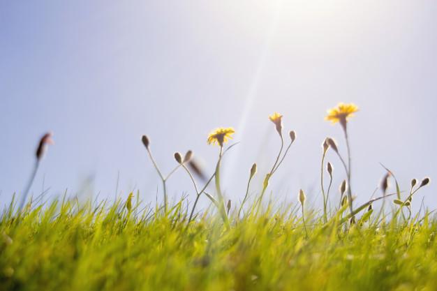 yellow-flowers_1361-70.jpg