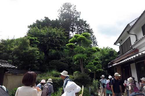 180607狐井稲荷古墳