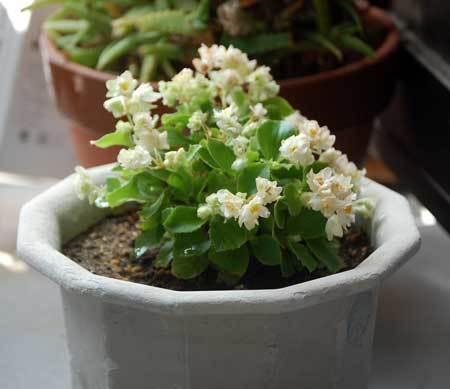 180702花
