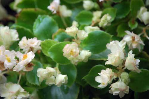 180702花2