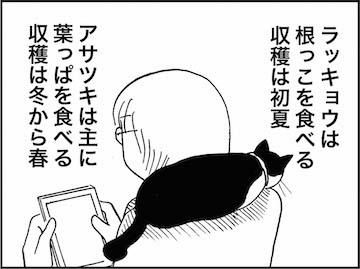 kfc01241-6