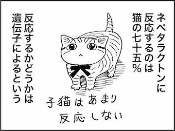 kfc01243-6