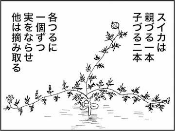 kfc01274-1
