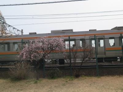 清水 東海道線