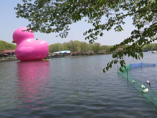 りんどう湖 ピンクの巨大アヒル