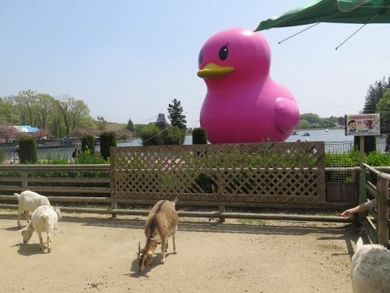 りんどう湖 ピンクの巨大アヒルとヤギ