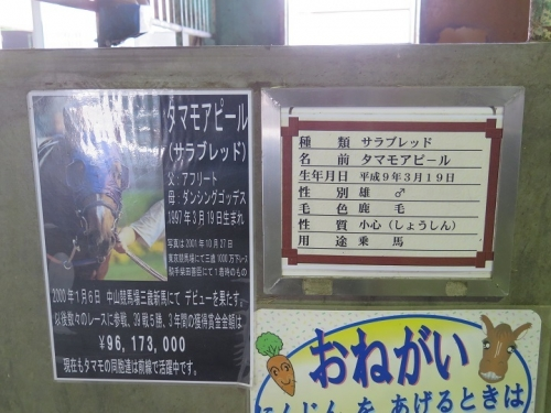 那須りんどう湖 お馬 タマモアピール