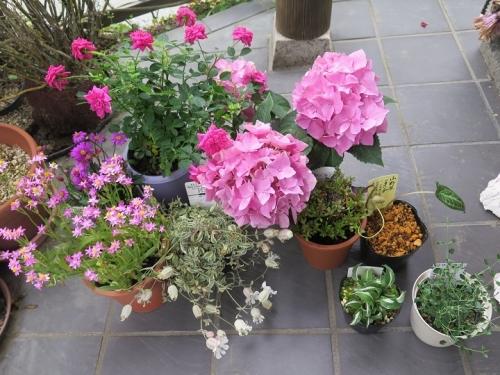 緑花木センターで買った花