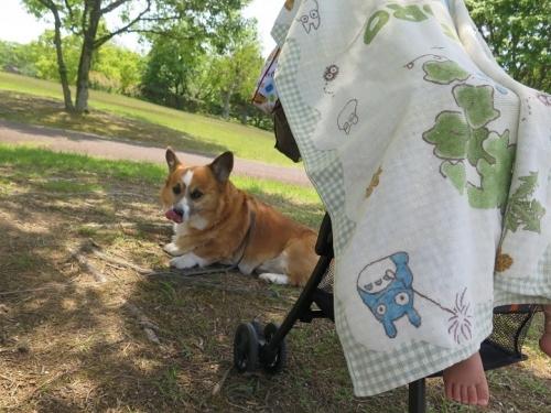 マゴラと犬
