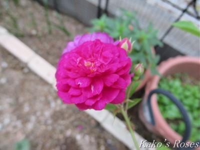 s-IMG_3039k30.jpg