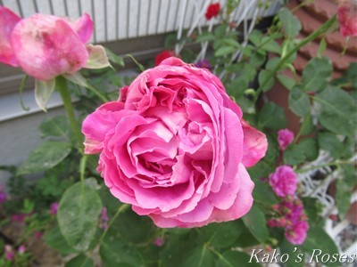 s-IMG_3240k30.jpg