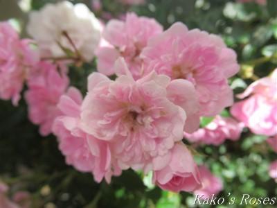 s-IMG_3307k30.jpg