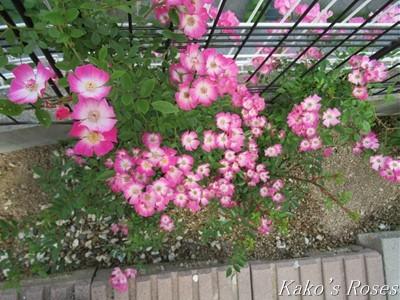 s-IMG_3406k30.jpg