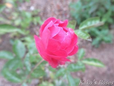 s-IMG_3464k30.jpg