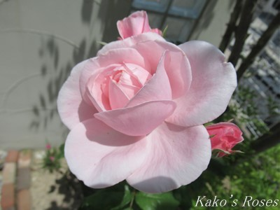 s-IMG_3558k30.jpg