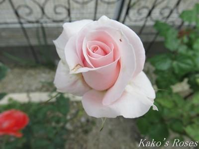 s-IMG_3582k30.jpg