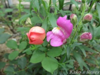 s-IMG_3652k30.jpg