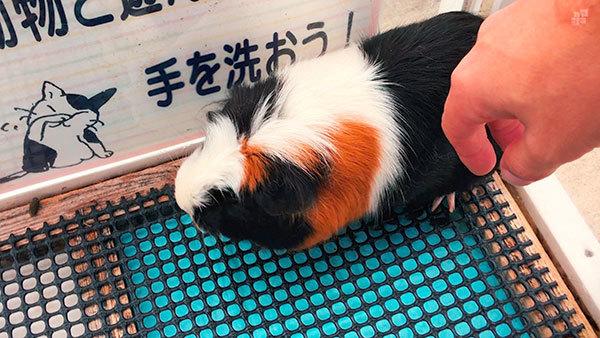 横須賀ソレイユの丘_動物園_17_s