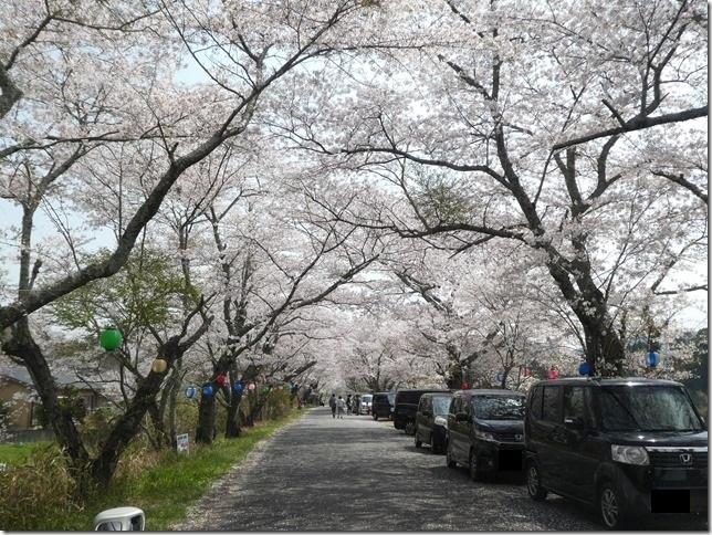 20180401-桜散歩01