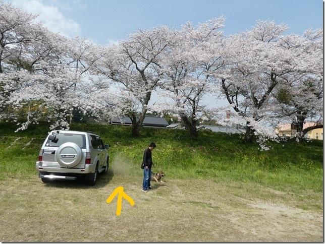20180401-桜散歩04