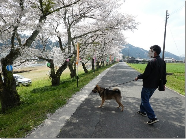 20180401-桜散歩11