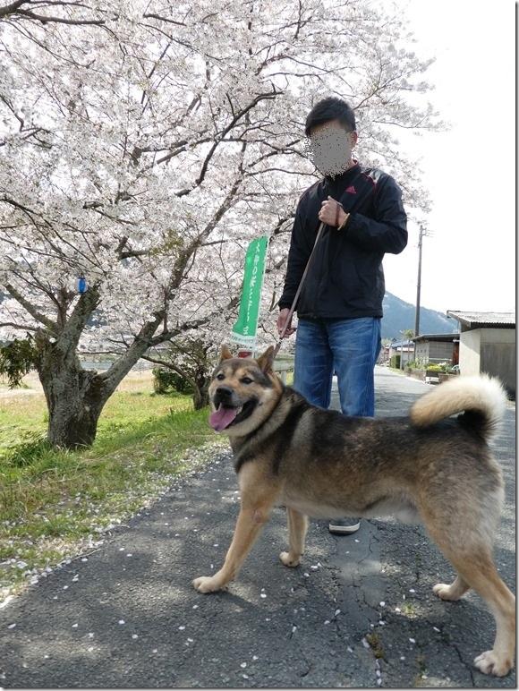 20180401-桜散歩15