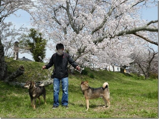 20180401-桜散歩21