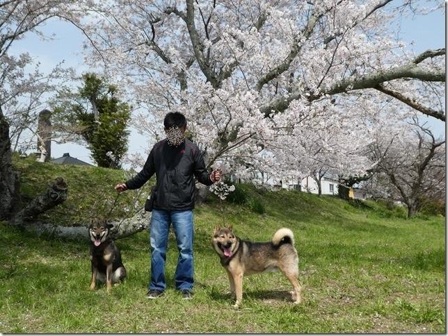 20180401-桜散歩22