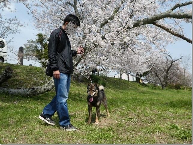 20180401-桜散歩25
