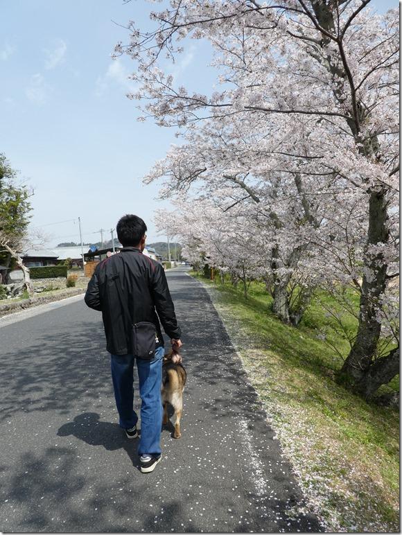 20180401-桜散歩29