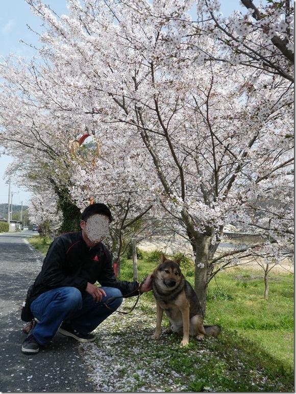 20180401-桜散歩32