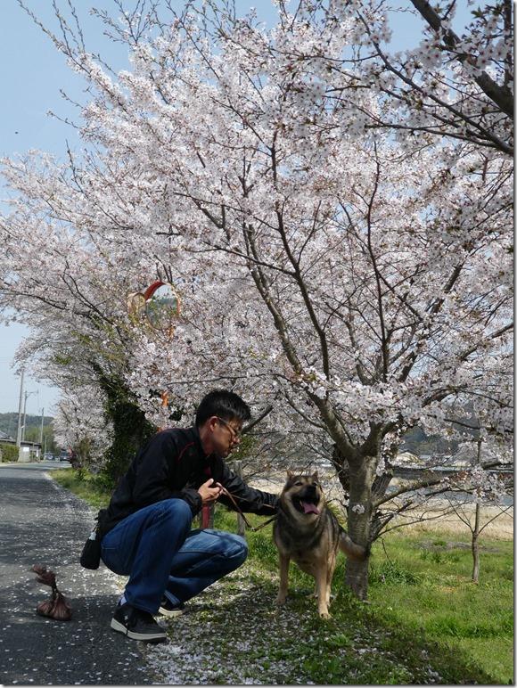 20180401-桜散歩33