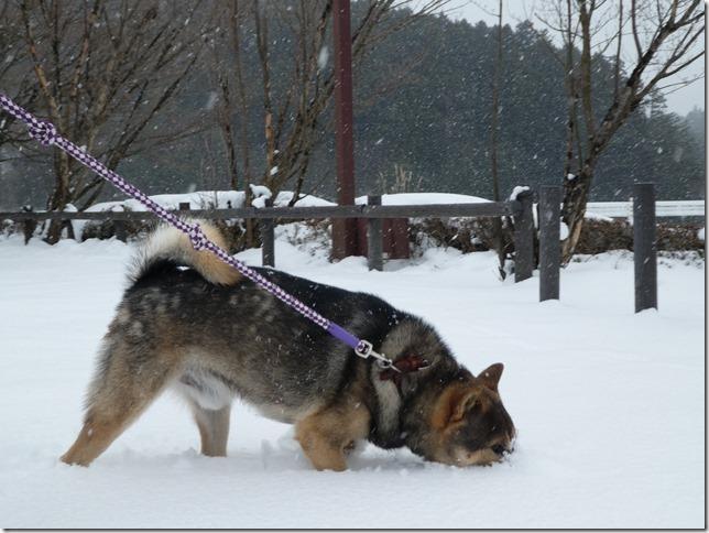 20180128雪遊び01-04