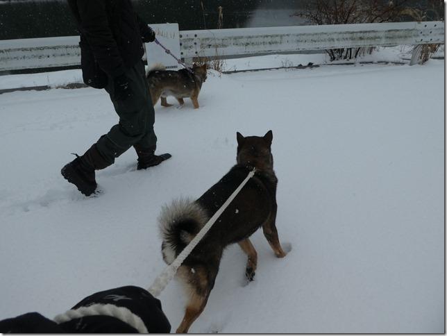 20180128雪遊び01-06