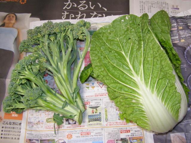 白菜とブロッコリー0701
