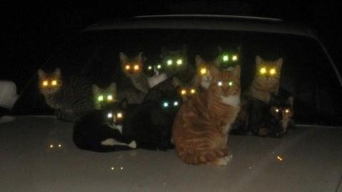 光る猫の目