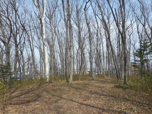 月寒東特別緑地保全地区