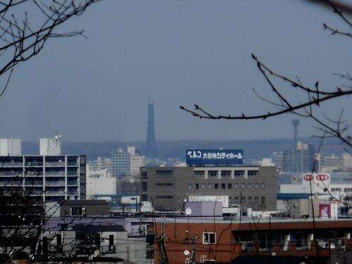 月寒東特別緑地保全地区から北海道百年記念塔を眺望