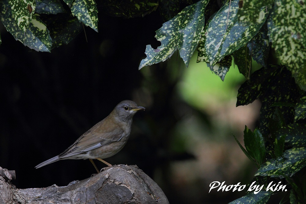 Pale Thrush ♪ ~PART2~