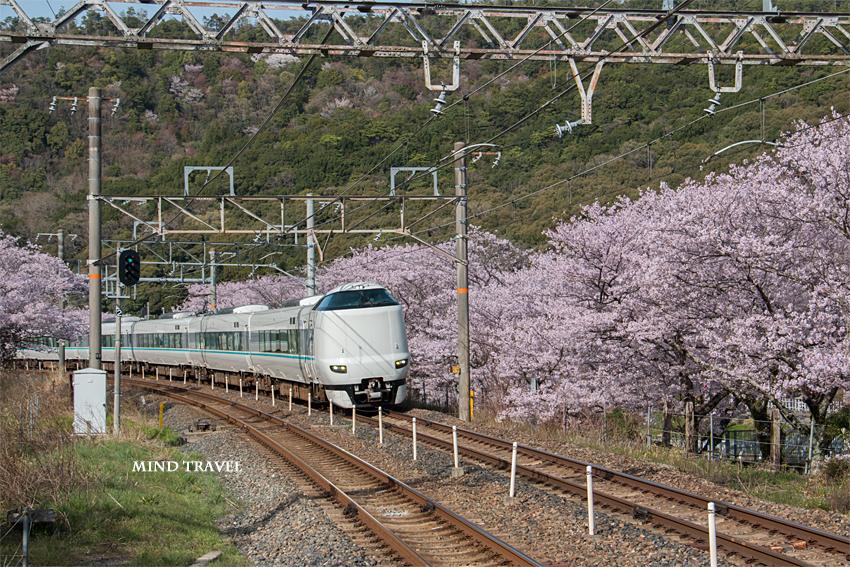 山中渓駅 桜2