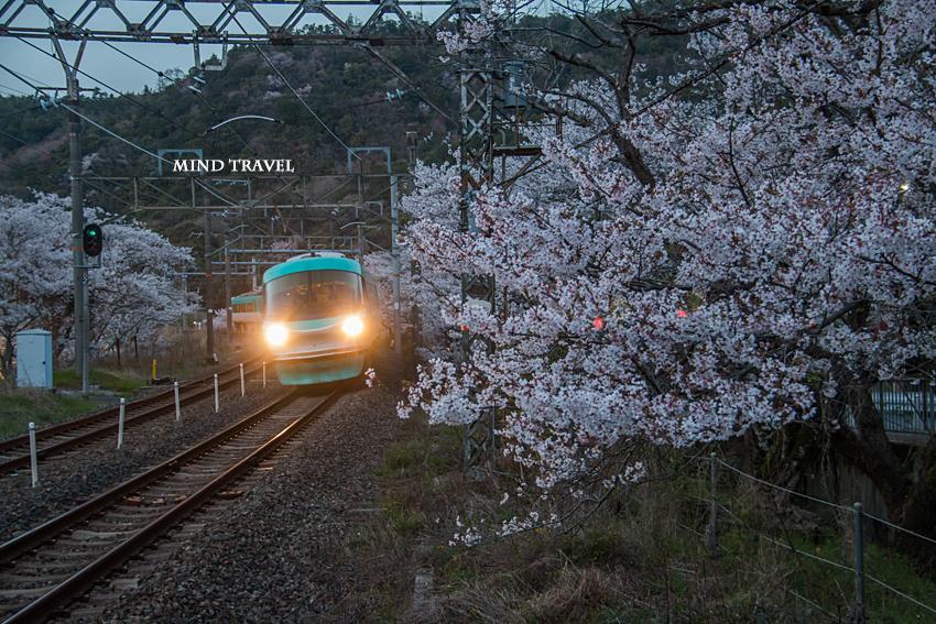 山中渓駅 桜4