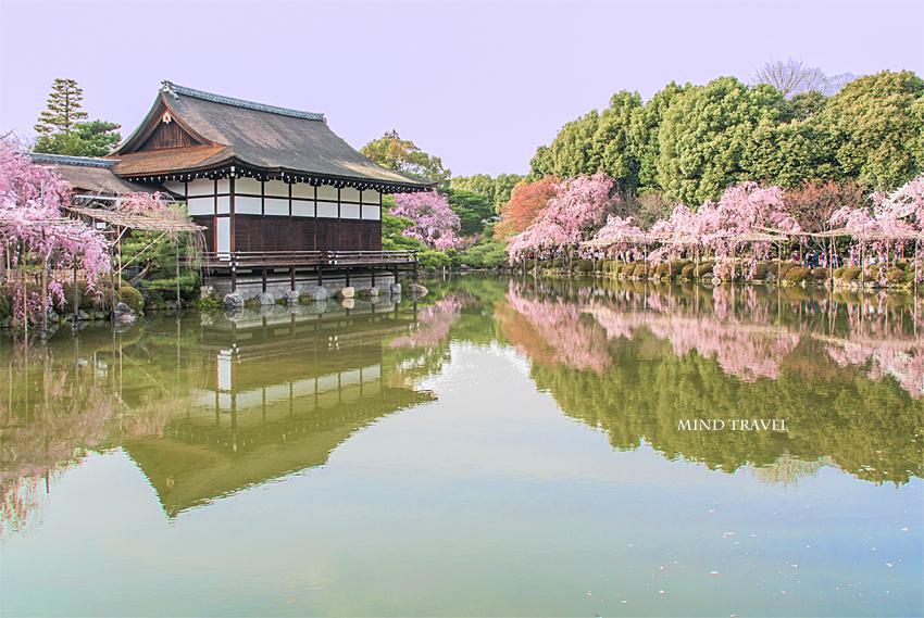 平安神宮 池としだれ桜3