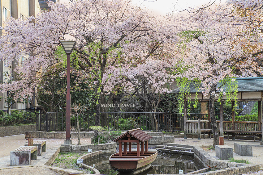 水面回廊 桜
