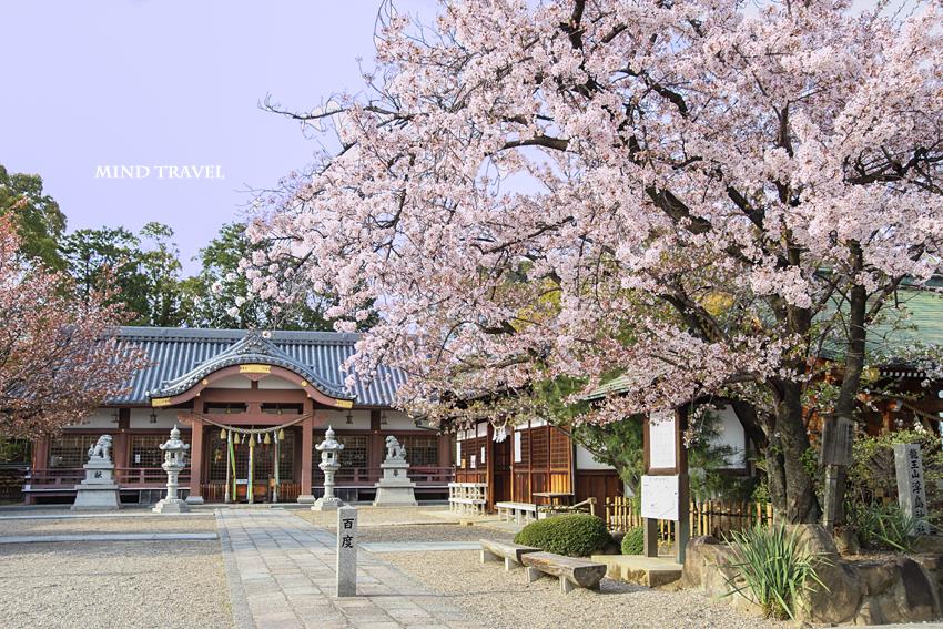 百済王神社 拝殿 桜